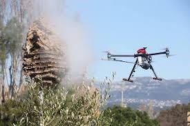 prévention par drone pour les nids de frelons asiatiques
