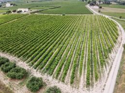 Les dégâts agricole par drone